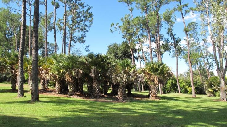 Botanic Gardens, Rockhampton